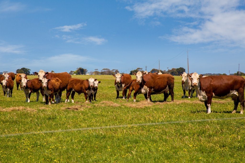 Grazing stock on property